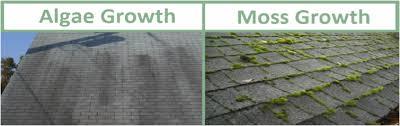 Roofing 101 algae growth
